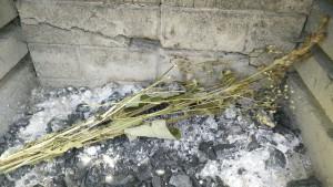 Mijn kruidenwis ligt klaar om verbrand te worden in Hoorn